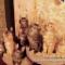 【猫動画】圧巻!たくさんの子猫でもやっぱり同じ動き!!(猫のシンクロ)