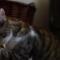 【猫ネタ】感動的な犬と猫の友情!-盲目の犬ターフェルと猫のパディタッド(Nat Geo Wild)-