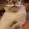 【小猫ネタ】なんと!待ち受け画像 + 時間 の奇跡