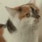 【猫NEWS】ドイツで人気!教会に勤める市役所職員の猫-聖ゲオルク教会のヴェンデルシュタイン-