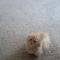 【猫動画】もこもこ!子猫って可愛いと再認識できる動画