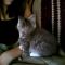 【猫動画】かわいすぎ!子猫にキスをすると・・・