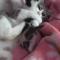 【猫動画】母猫の愛!でも強すぎて子猫キレる・・・