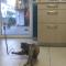 【猫動画】何が一体!?猫と遊ぶと爆笑する赤ちゃん!