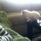 【猫動画】あぶない!!子猫が飛ぼうと迷った末に・・・