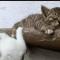 【猫動画】クマとたたかう猫!?おもしろ猫動画8選 まとめ