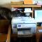 【猫動画】オフィスに1猫!?デスクワークのサポートをする猫