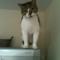 【猫動画】猫が冷蔵庫から降り・・・