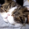 【猫動画】んなバカな・・・!?「ゲゲゲの鬼太郎」を歌う猫?