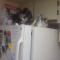 【猫動画】衝撃の冷蔵庫
