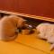 【猫動画】そのリアクションって!ご飯を取られそうになった子猫がかわいすぎ!!
