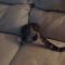 【猫動画】え、ここに!?猫、ごくわずかなソファの隙間に・・・!?