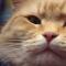 【猫ネタ】リアル猫の恩返し – ボブという名のストリート・キャット(Street Cat Bob)