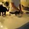 【猫動画】意地でも食べたい!!子猫が腹ペコすぎると・・・