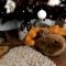 【猫動画】実はクリスマス好き!?クリスマス時の猫の反応は・・・