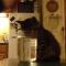【猫動画】ドキドキドキ!子猫、水を飲みながら・・・