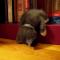 【猫動画】猫動画まとめ!かわいすぎる子猫が寝落ちする瞬間 12選