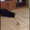 【猫動画】猫は目が回るのか?猫がグルグル回転すると・・・