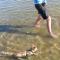 【猫動画】大丈夫!?子猫、初めての水泳は・・・