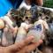 【猫動画】みんな真剣!!必死にミルクを飲む子猫たちの様子