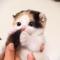 【猫動画】この可愛さはヤバイ!!子猫、シッポで遊ぶだけで可愛さ爆発!?