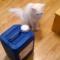 【猫動画】猫は進化している!タンクのフタを回して開ける猫・・・!?