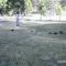 【猫動画】出発進行!?子猫による「子猫列車」がかわいすぎる!