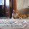 【猫動画】え!?今のって? 衝撃的な格好で走り去る猫!