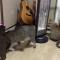 【猫動画】えっ、そんな事が!?猫が猫を回転させる・・・!?