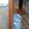 【猫動画】ねえ見て見て!ピョンピョン飛ぶのを見て欲しそうな子猫