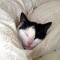 【猫画像】おやすみなさい