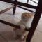 【猫動画】コクリコクリッと居眠りする子猫が可愛すぎる