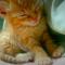 【猫動画】眠いけど・・・眠気とたたかう子猫がかわいすぎる!!