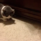 【猫動画】あれ、エサがない!?猫の前にエサを置くと・・・