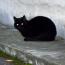【猫NEWS】イギリスで黒猫を捨てる理由がヒドい!