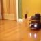 【猫動画】猫のトラック野郎!?猫だけどトラックを乗って・・・!?