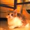 【猫動画】たった11秒でこの破壊力!!子猫がムクッと起き上がったら・・・!?