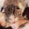 【猫動画】これはレアな猫動画!?生後6日の赤ちゃん猫たちの様子は・・・