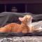 【猫のこと】こんなにスゴイ!!猫のスーパーな能力 10選