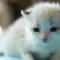 【猫動画】可愛さの玉手箱や〜!!赤ちゃん子猫の厳選動画まとめの内容とは・・・!?