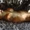 【猫のこと】こんなにあった!?「猫」と「大型猫科」の共通点10個とは・・・!?