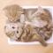 【猫動画】子猫3匹が1パック!?破壊力抜群のかわいすぎる子猫パックができるまで・・・