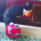 【猫動画】そ、そんなバカな!?猫が器用に玉乗りをするハズが・・・!?