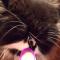 【猫動画】猫でもなるの!?冷たいものを食べた時の「アイスクリーム頭痛」は起きる・・・!?
