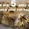 【猫のこと】猫飼い必見!!飼い猫をもっとHAPPYにする簡単な5つの方法とは・・・!?