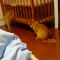 【猫動画】予想外の結末が!!猫がベビーベッドで遊んでいると・・・!?