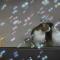【猫動画】うっかり見とれてしまう!!猫とシャボン玉が出会うと・・・!?