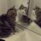 【猫動画】反応はさまざま!?「鏡」と対面した時の猫たちの反応は・・・!?