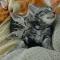 【猫動画】定番の子猫動画!?子猫が睡魔とたたかう様子がちょっと・・・