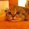 【猫動画】黒目が大きく!?獲物を狙う時の猫の表情とは・・・